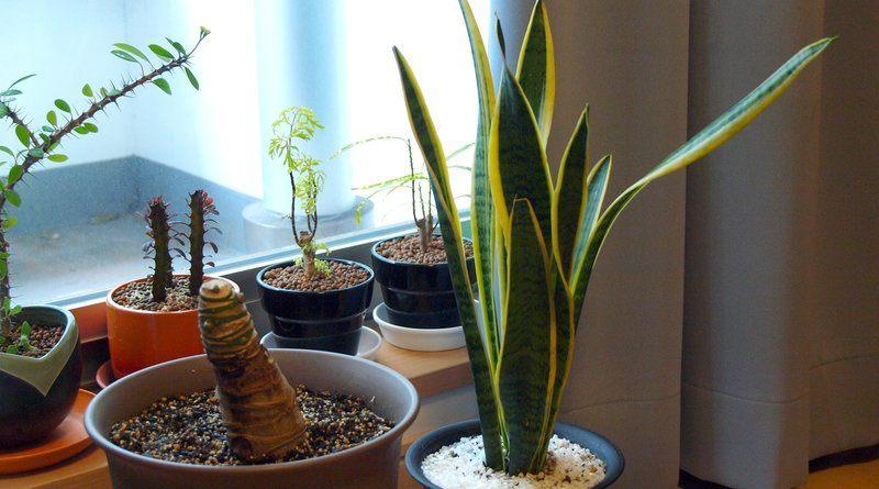 домашни растения